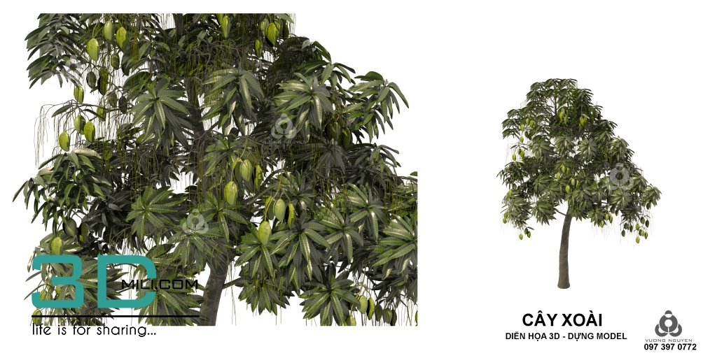 Free Download Pictures Of Mango Trees