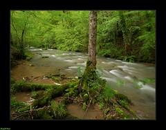 La Furieuse en amont du Martinet - Jura