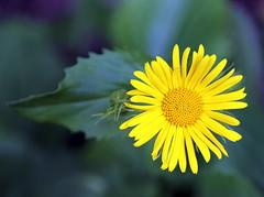 The beautiful yellow flower