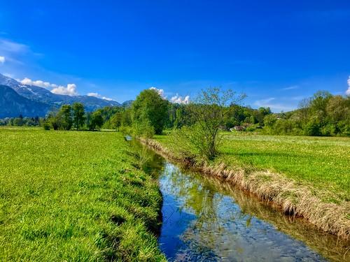Brook and meadows with dandelions between Oberaudorf and Kiefersfelden in Bavaria, Germany