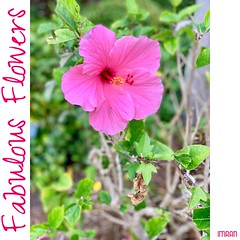 Beautiful Bokeh Pretty Pink - IMRAN™