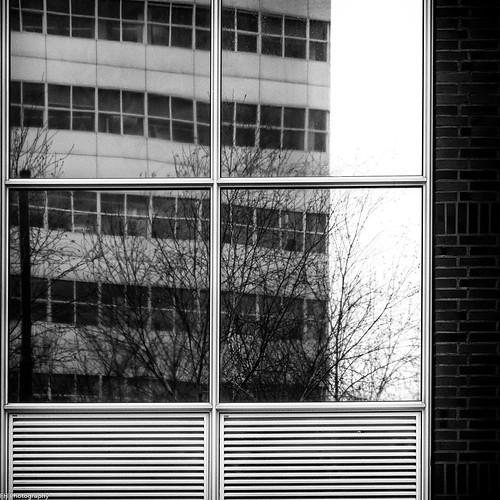 windows.windows