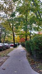 Continental Avenue Sidewalk
