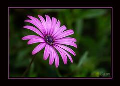 « Si la vie n'est qu'un passage, sur ce passage au moins semons des fleurs » : de Montaigne - Photo of Fontenilles