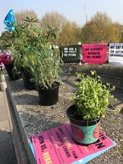 Plants on Waterloo Bridge