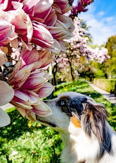The Smell of Magnolia