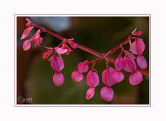 Tamaya : Là où Dieu vous a semé, là il faut fleurir. Prov. Roumain - Photo of Fontenilles