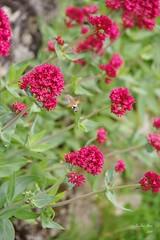 Fleur petit insecte