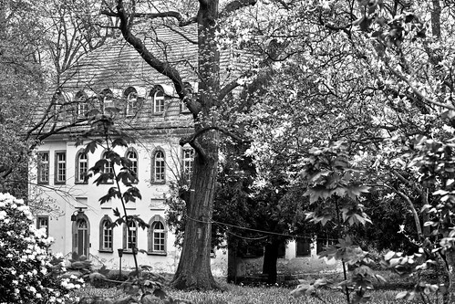 Tannenfeld