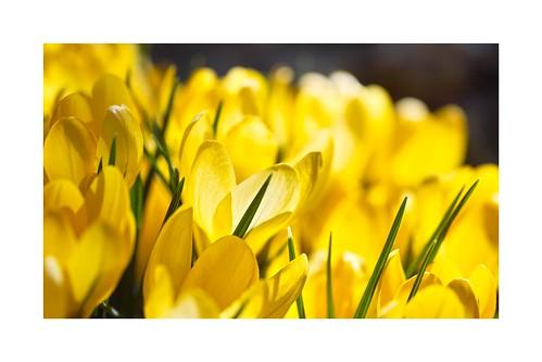 Fleurs de printemps III