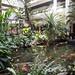 Indoor koi fish pond