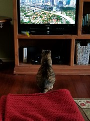 the cat has started to watch tv , its going to rot her brain out