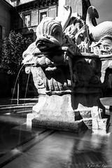 Fontaine de la Place des Quatre Dauphins
