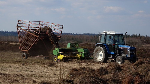 Harvesting heather
