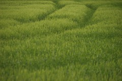 Grassy Fields - Photo of Saint-Quentin-la-Tour