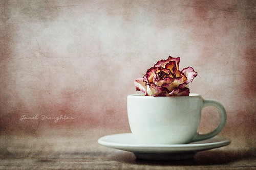 Cup Of Loveliness
