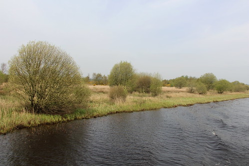 The Shannon River