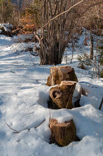Matin d'hiver (Vandans, Osterreich)-108