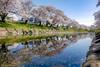 Photo:新境川堤の桜 (Shinsakaigawa River | Gifu, Japan) By kzy619