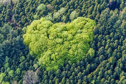 Deciduous Forest Island