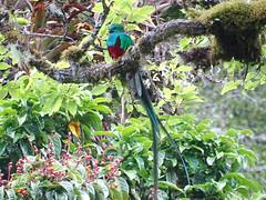 Costa Rica-Savegre