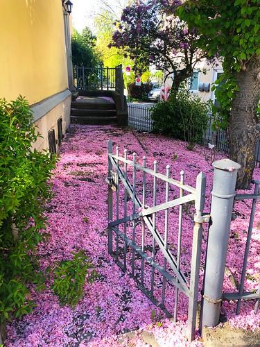 Spring in Coburg:-)