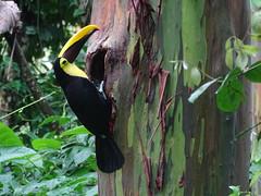 Costa Rica-La Selva-Arenal