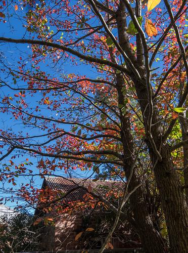 Autumn hints