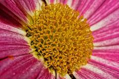 Flower heart - Cœur de fleur - Photo of Montet-et-Bouxal