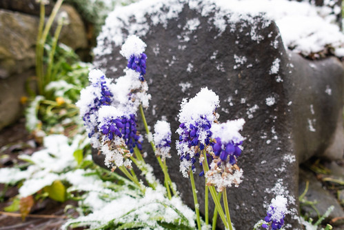 Winter am 5.5.19 (1)