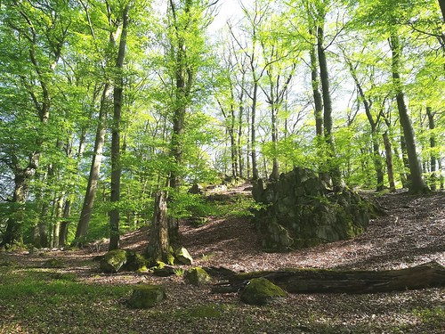 Wald bei Niedersayn, Westerwald