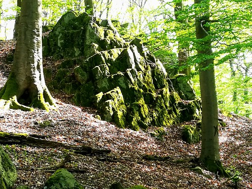 Basaltstein, Wald bei Niedersayn, Westerwald