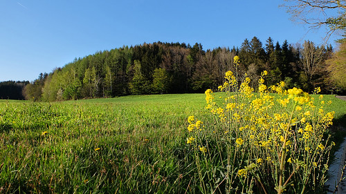 In the spring sun -
