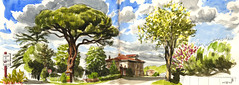 190505pinparasol - Photo of Saint-Sulpice