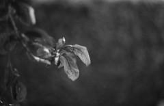 In the garden - Photo of Herbeville