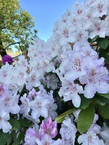 129/365: Bountiful Blooms