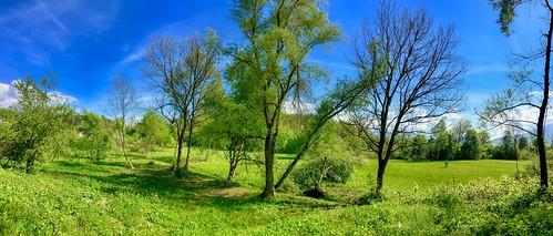 Trees and meadows near Oberaudorf, Bavaria, Germany