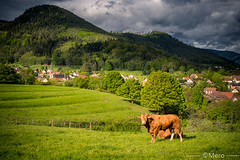 Mr vache - Photo of Breitenbach