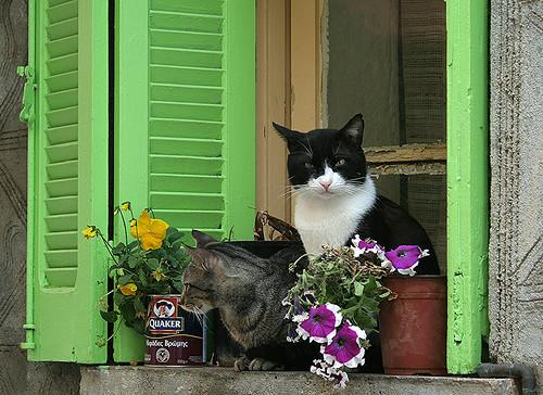 Critical Cretan Cat