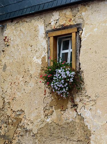 Window box flowers upstairs outside the brewpub