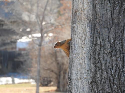 Squirrel on a tree copy 2