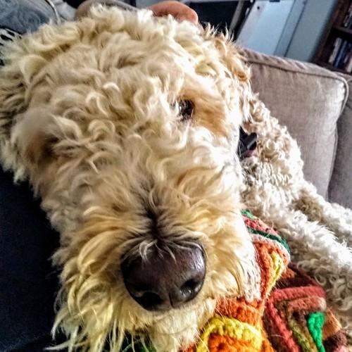 The Grand-dog - Mishka