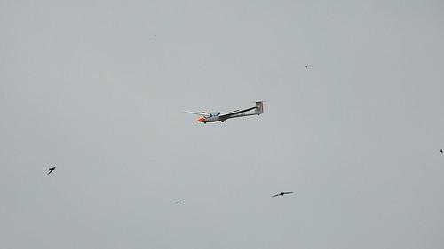 Segelflugzeug im Wettkampf mit Rauchschwalben ;-)
