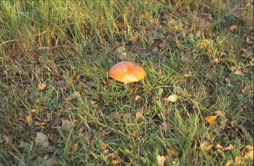 98400261-9747 Griendtsveen 26 september 1992