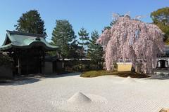 Kodai-ji, Hojo Zentei (Garden) -2 (April 2019)