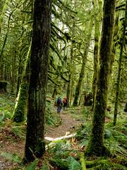 Through damp forest