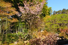 Hosen-in, Bankan-en (Garden) -2 (April 2019)
