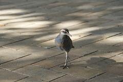 Green Island Birds