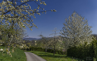 Blooming landscapes / Ohmenhausen