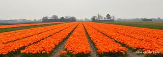 Heel veel oranje